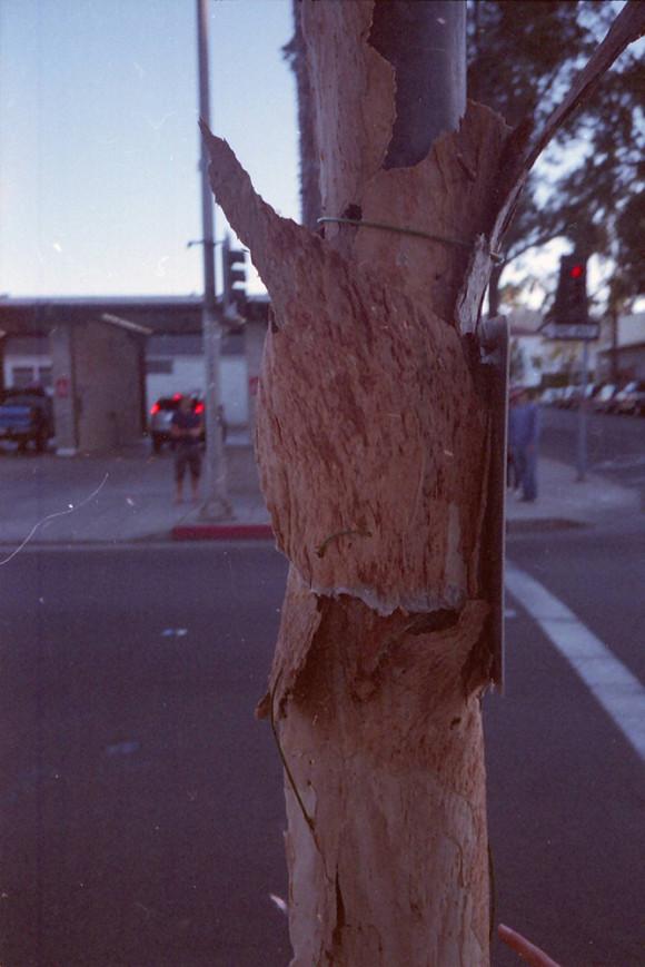 tree pole